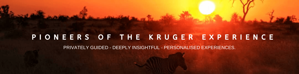 pioneers of the kruger experience 4