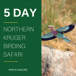 5 Day Kruger Park Birding Safari