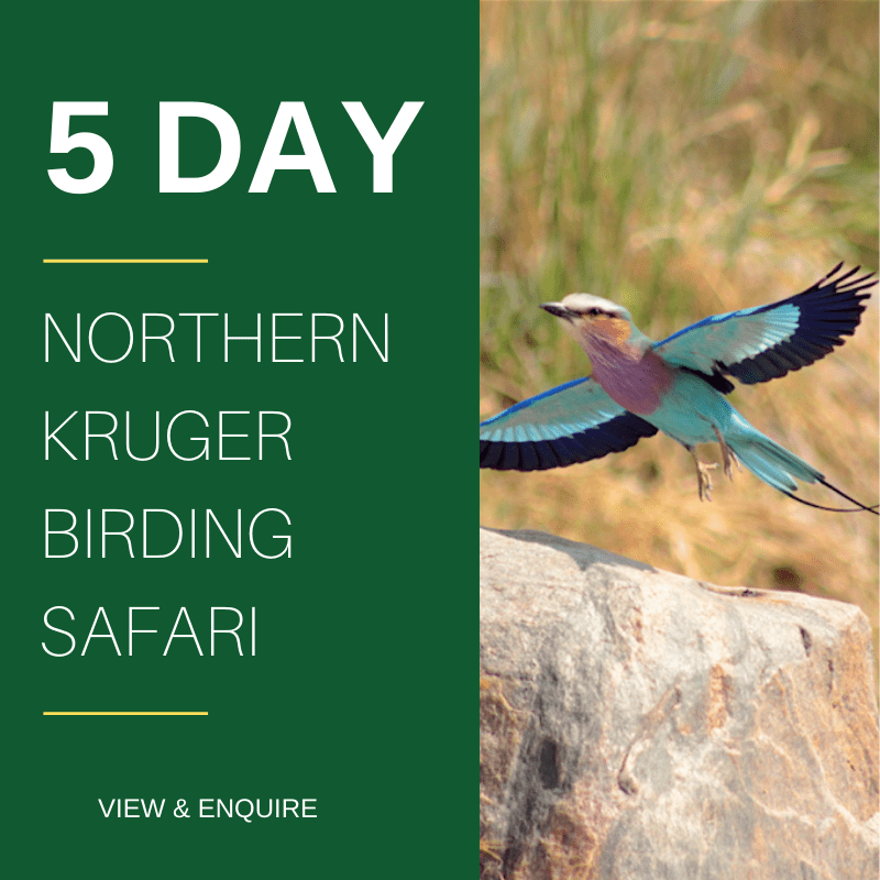 5 Day Kruger Park Birding Safaris