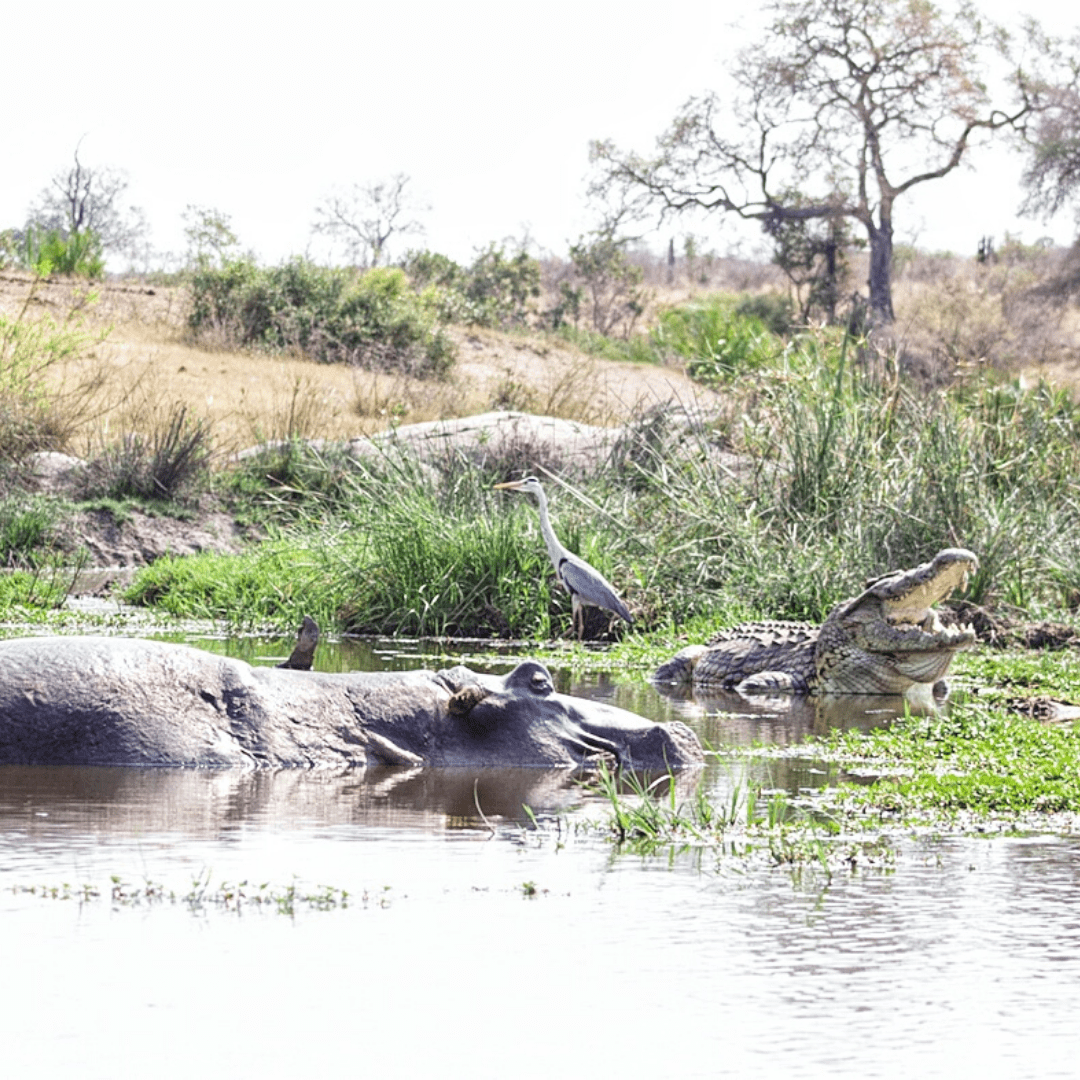Biyamiti Weir in Kruger Park