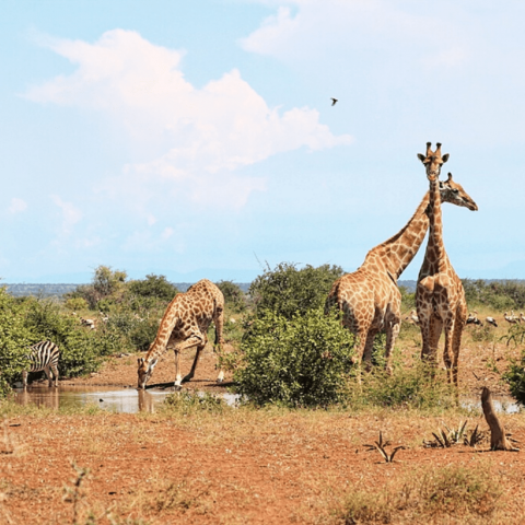 Kruger National Park Safari with Safaria