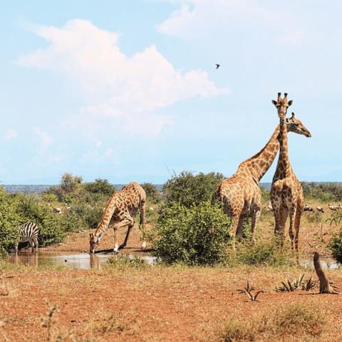 Kruger National Park Safari with Safaria