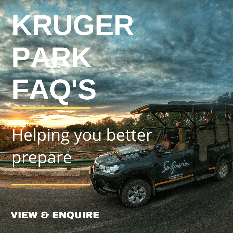 Kruger National Park Frequently Asked Questions