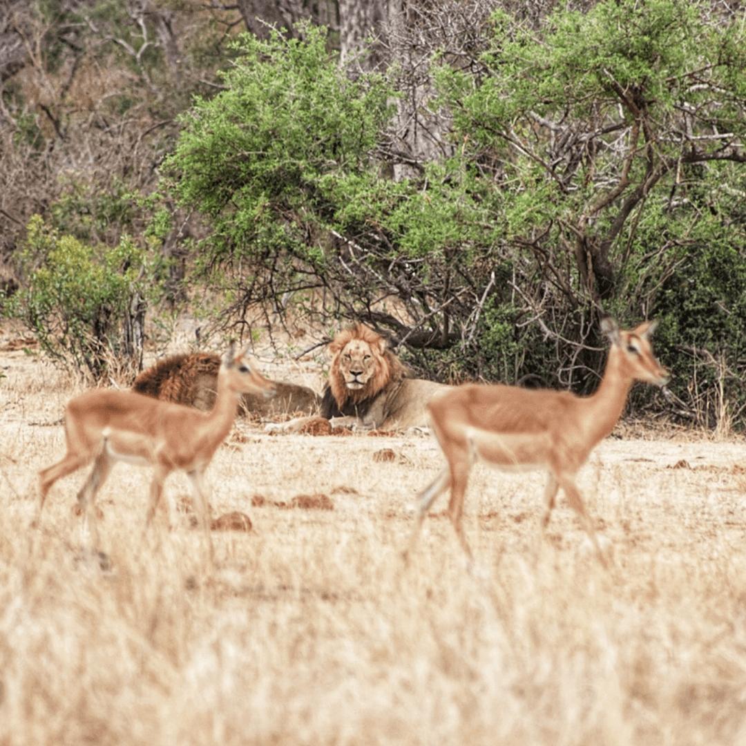 Kruger Train Hotel Safari