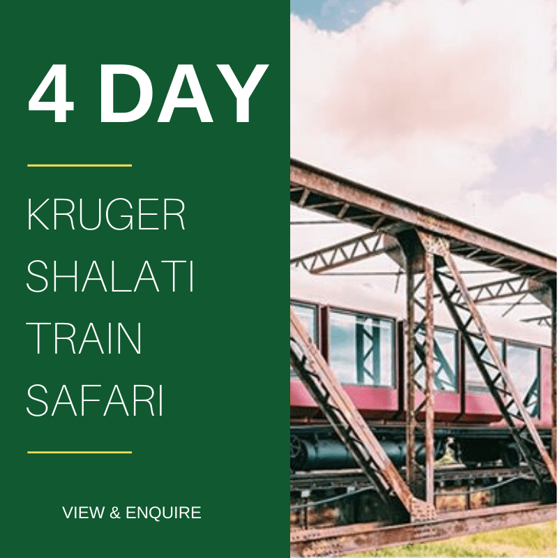 4 Day Kruger Train Safari Shalati