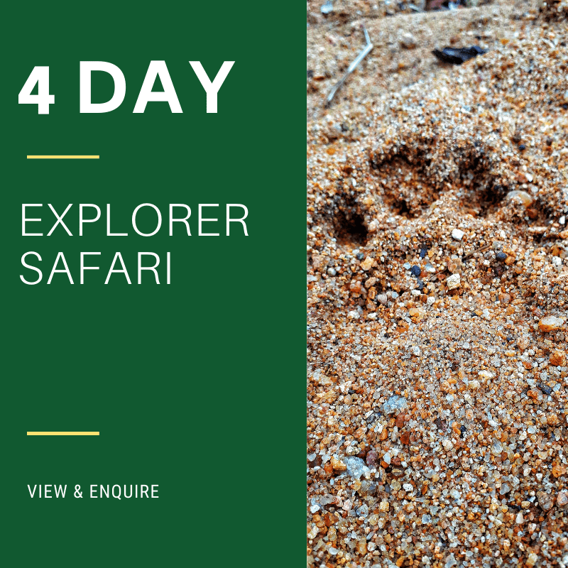 4 Day kruger park Explorer Safari
