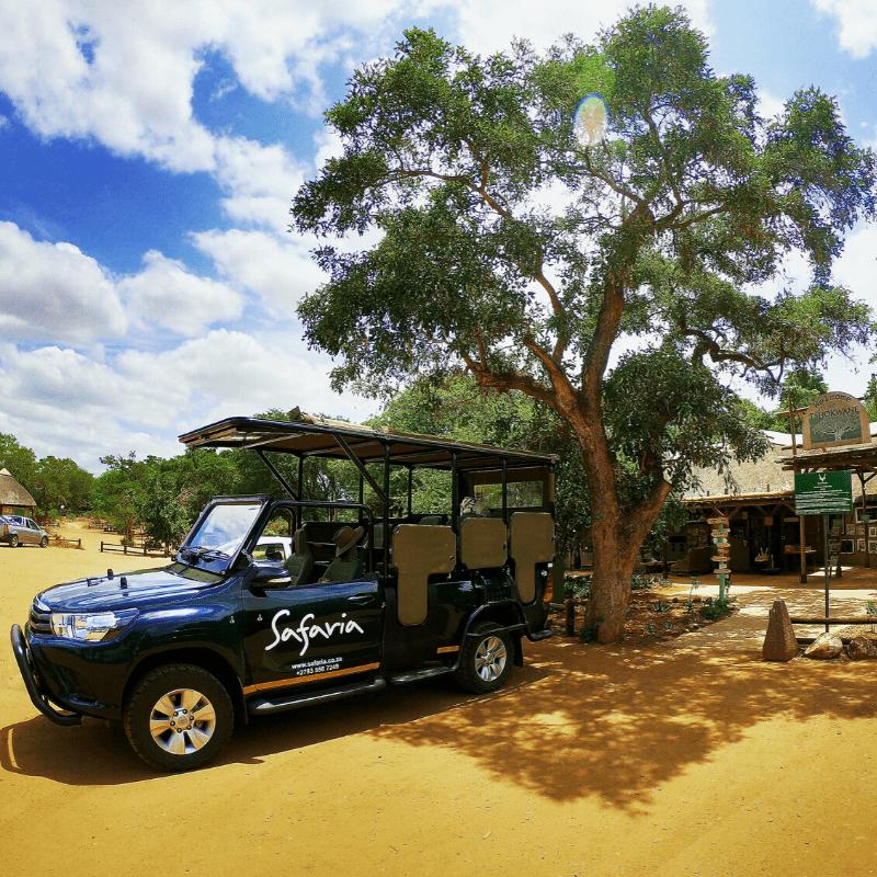 Apple Leaf at Tshokwane Kruger Park