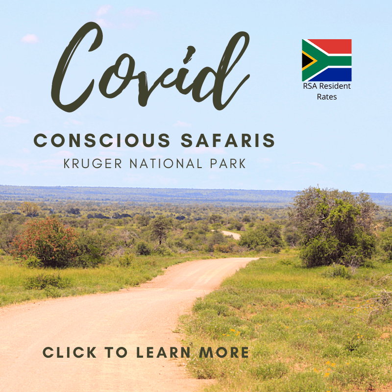 Covid conscious safaris kruger national park