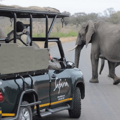 Kruger National Park Safari