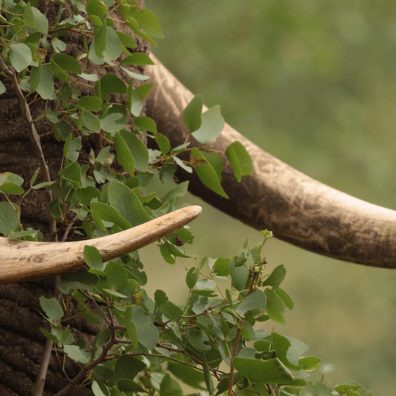 Mopane Tree leaves Elephant