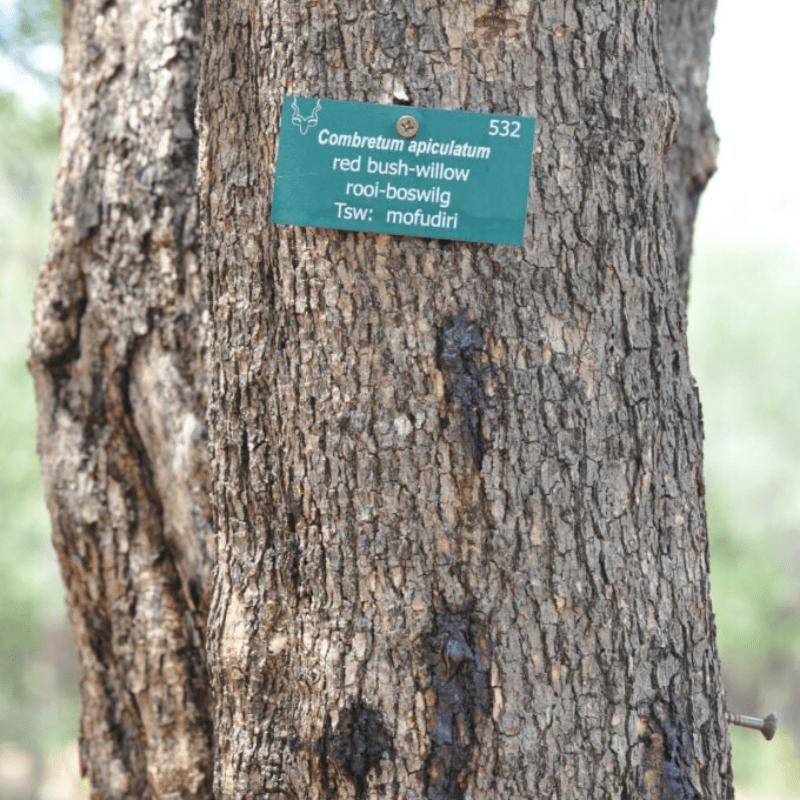 Rec Bushwillow Bark