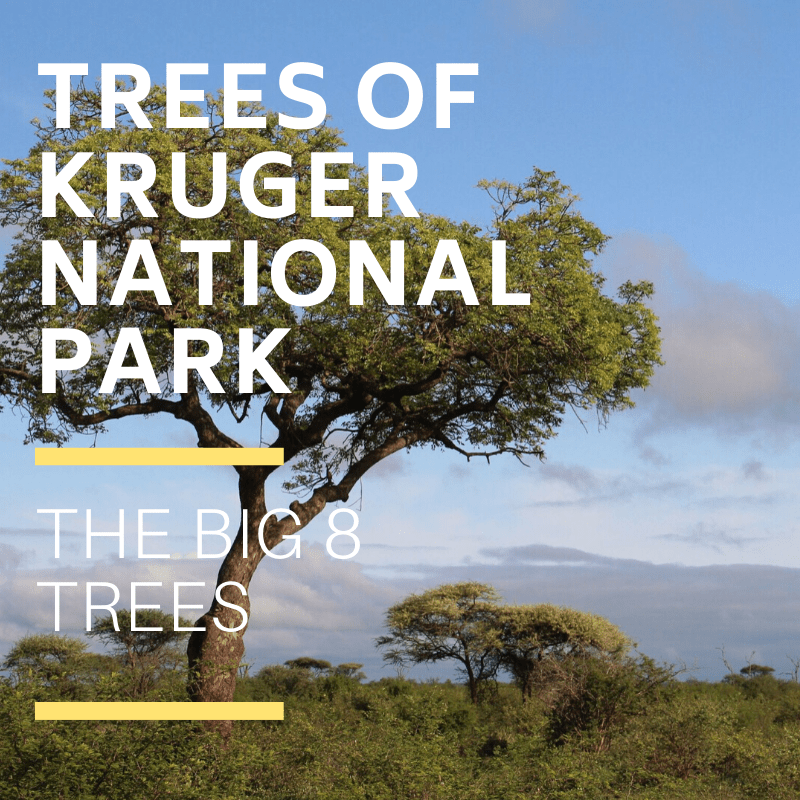 Kruger National Park Trees