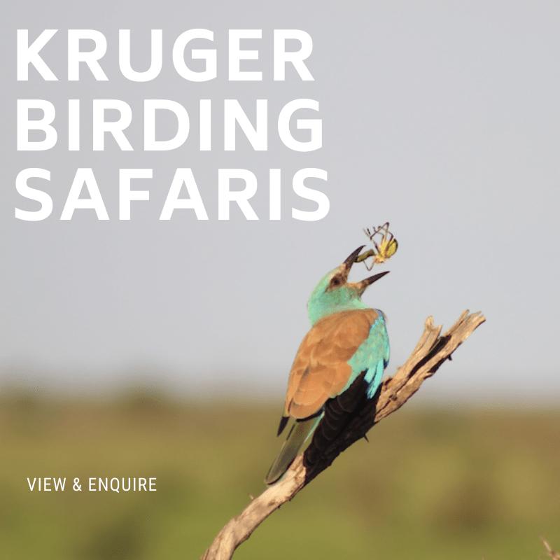 Kruger Birding Safaris