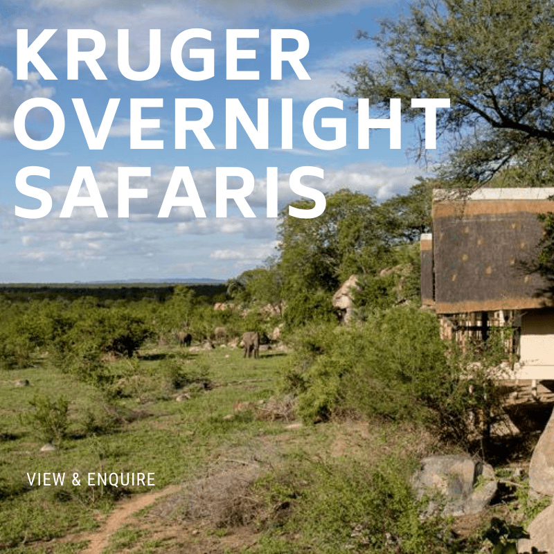 Kruger Overnight Safaris