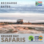 recharge safari rates