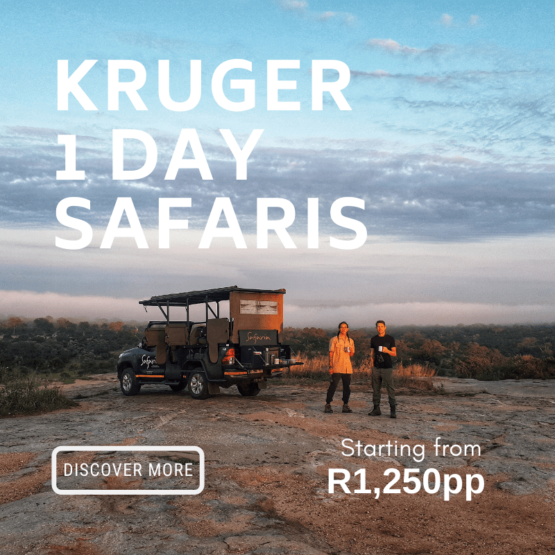 Kruger Day Safaris from R1250